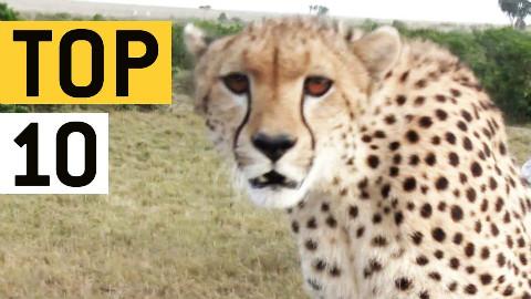 世界十大危险奇葩动物热门视频集锦