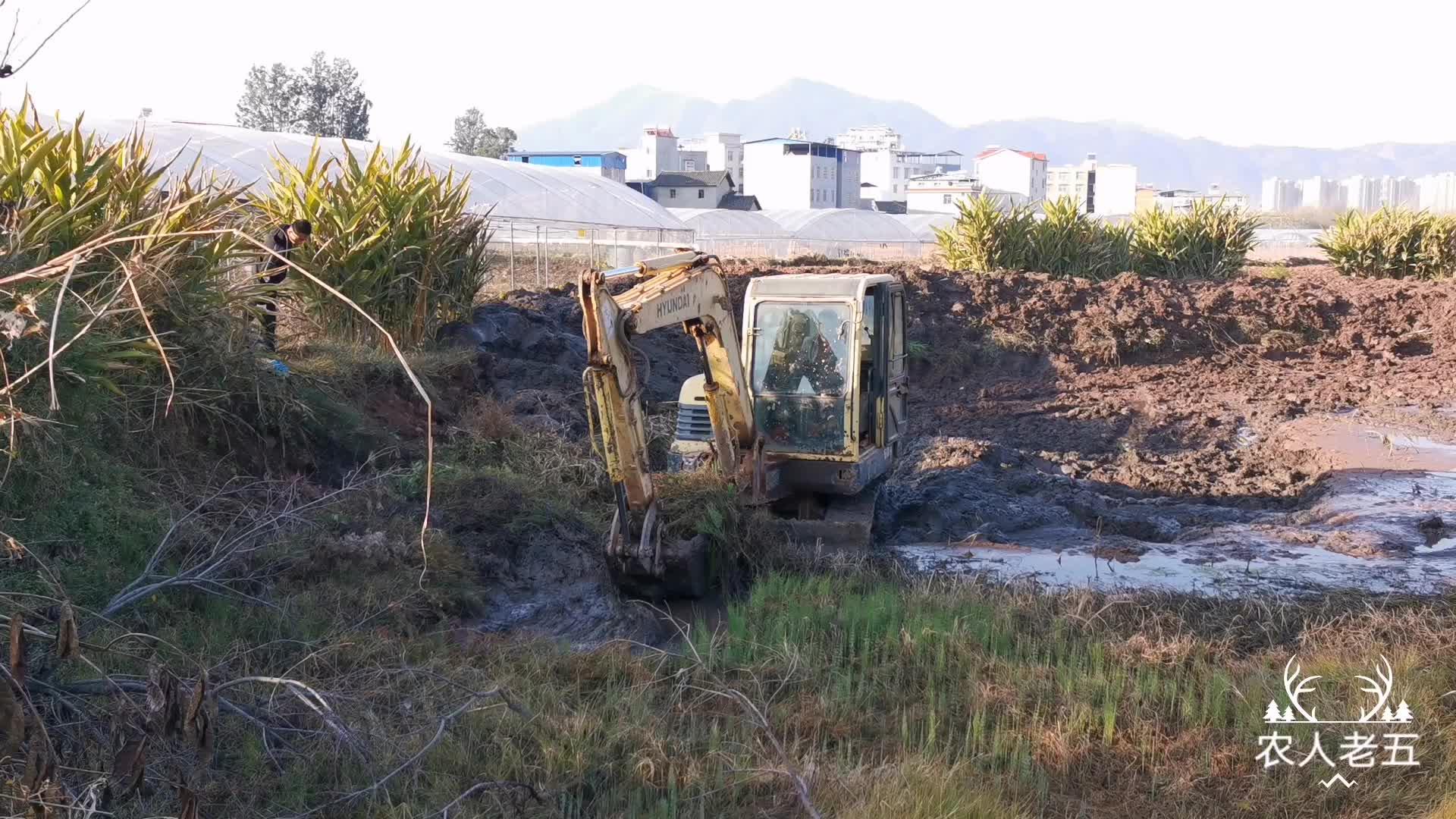 挖掘机清理完鱼塘, 大叔去捡漏挖开泥巴就能发现好货, 越挖越高兴