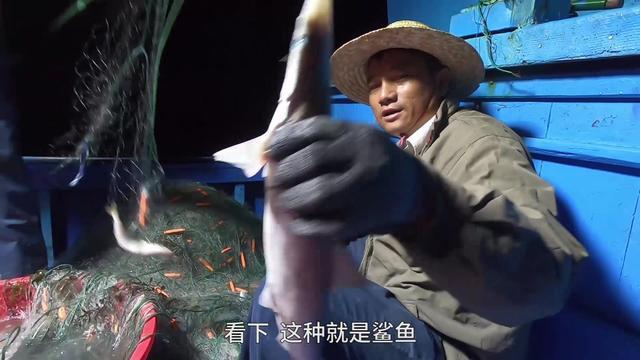 阿彬出海赚大了, 深海螃蟹大鱼塞满渔船, 识货老乡抢先买走鲨鱼