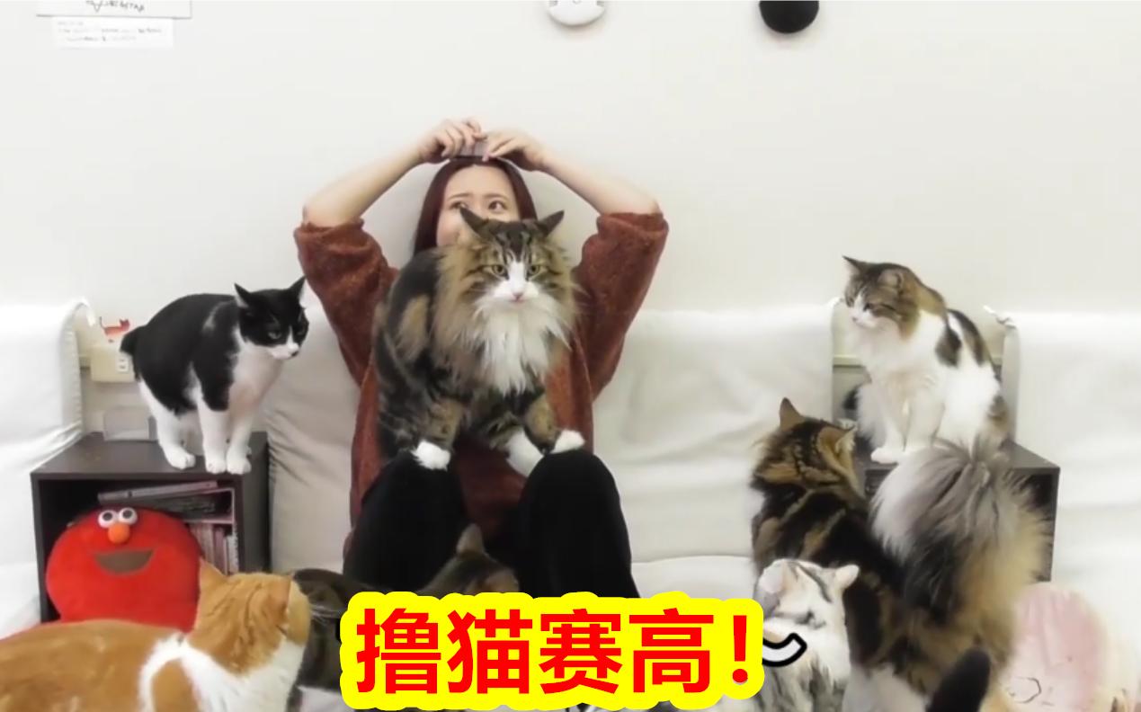 在猫咖包场撸猫是一种怎样的体验?烫嘴小姐姐:我太难了!【大松绘美】