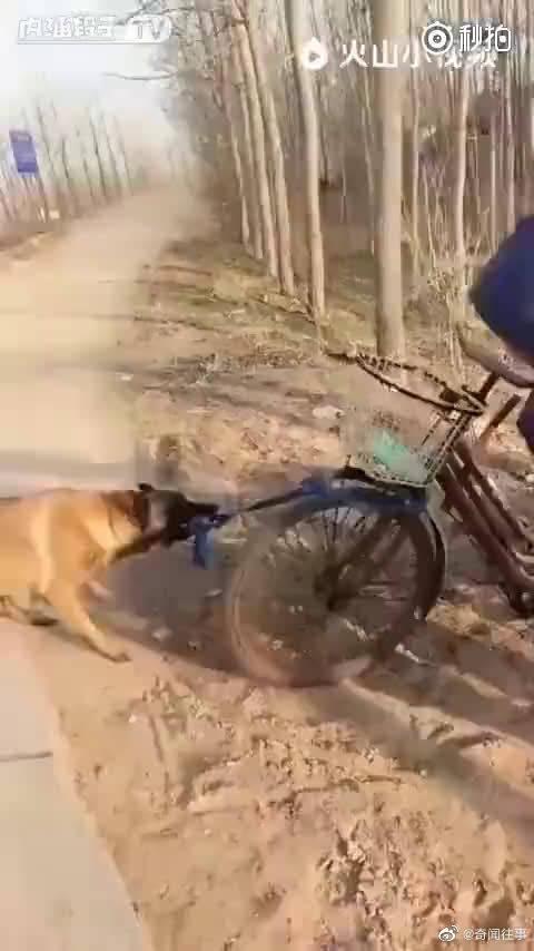 中华田园犬诠释一个字——忠