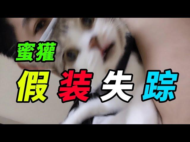 """獾家猫: 挑战跟猫""""假装失踪""""不被发现,猫咪反应令人心疼!【突击手蜜獾】"""