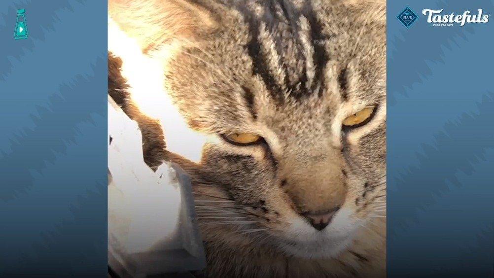 流浪猫居然在废车场找了份工作...