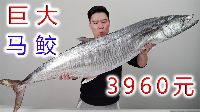 3960买一条大马鲛鱼, 价格是普通马鲛4倍, 它真的能好吃吗?