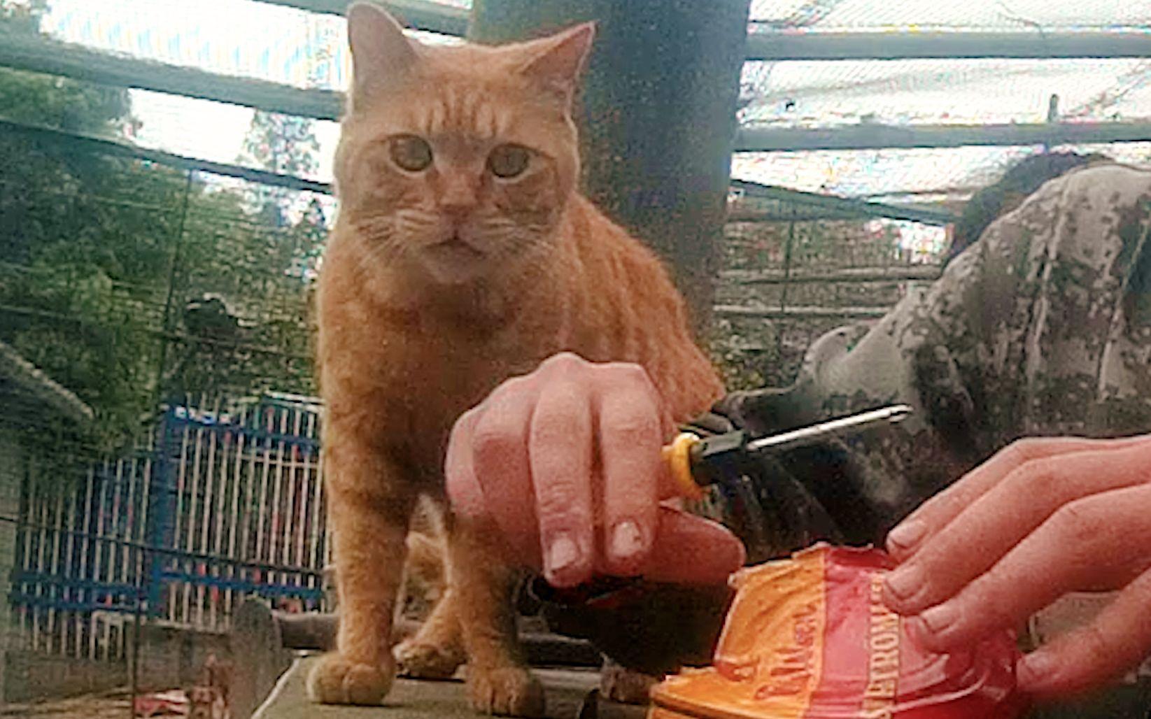 在200只猫面前开鲱鱼罐头, 猫: 你别过来, 我害怕!