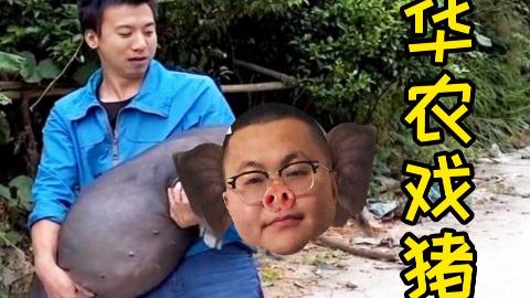 【孙笑川】华农戏猪