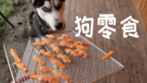 狗哥哈士奇第一次吃鸡胸肉裹胡萝卜零食好开心啊,倒是它傻狗主人真的倒霉