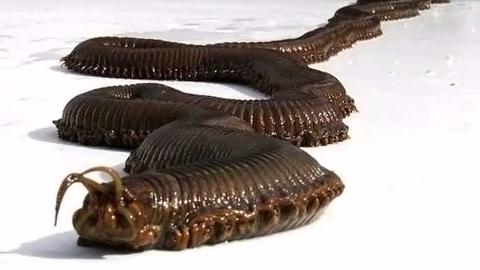 世界9个最不可思议的生物!怪异海底虫子能长到数米长?