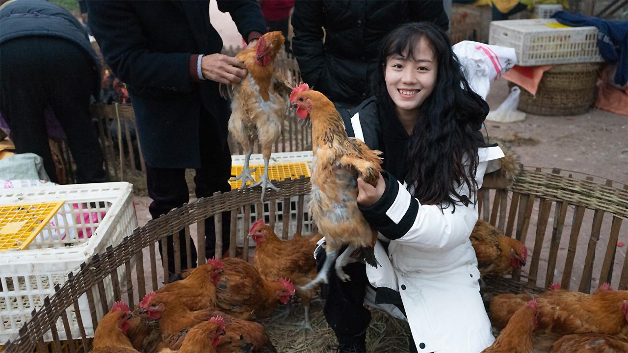 小妹去农贸市场买鸡苗,25只鸡花了1000多,你们觉得划算吗