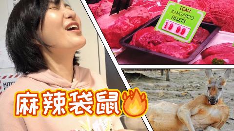 【澳洲vlog】借粉丝宿舍做袋鼠料理,是怎样的体验?
