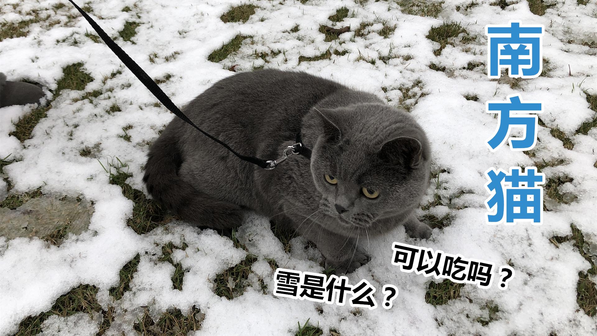 南方人带着猫第一次去玩雪,这人是很激动,猫怕是冻傻了?