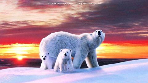 【纪录片】白色星球 (2006)