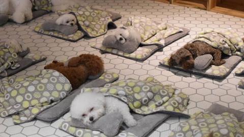 韩国开设宠物狗幼儿园!狗狗:我作为一条狗,也逃不过上学的命运!