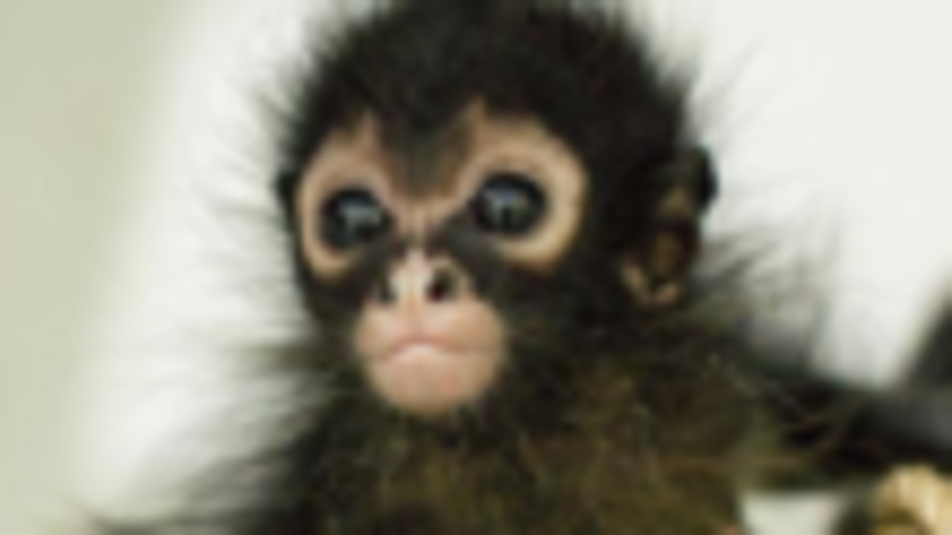 [纪录片]自然世界:丛林动物医院 Jungle Animal Hospital [中英字幕]