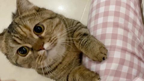 我就这么看着你,你好意思不给吃的???