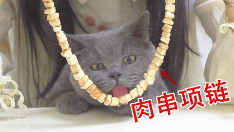 100颗肉干串成项链,挂猫咪脖子上,猫会怎么做?