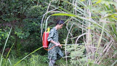 农村小伙打除草剂,杂草3米高,草里有一窝蜜蜂,媳妇叫他小心点