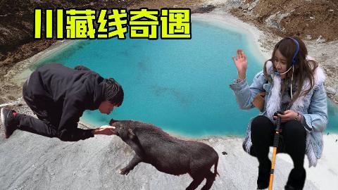 【说走就走】收了个干儿子,遇到个小姐姐,来到了稻城亚丁!川藏线奇遇第三期