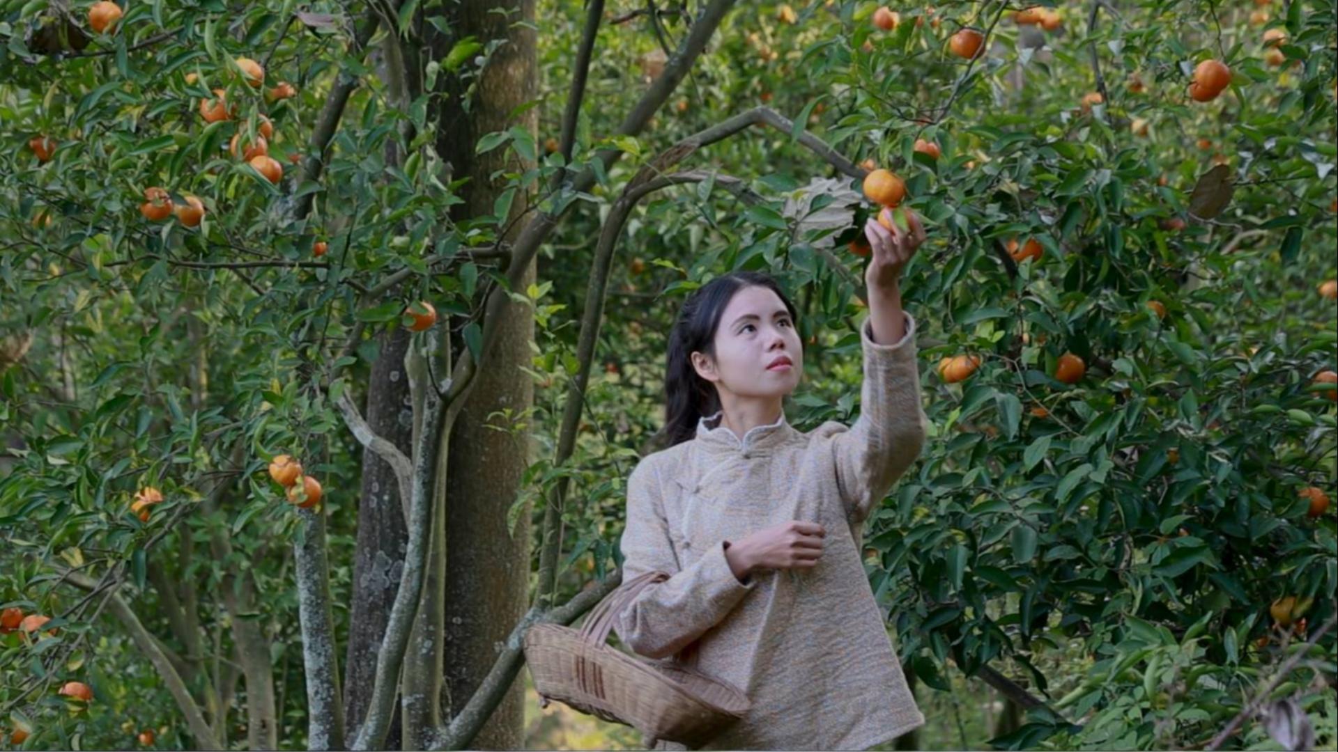 山里的橘子熟了,我把它摘下来晒干,做成美味的蒸排骨吃