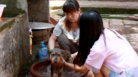 农村婆媳一起给3只猫猫狗狗洗澡,狗狗表现的最好,不吵也不闹