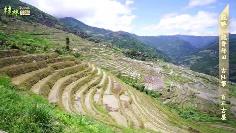 台湾大叔大妈跟团游大陆,逛世界农业文化遗产龙脊梯田
