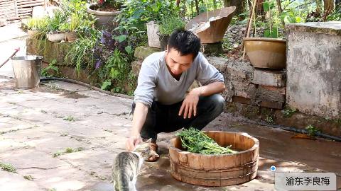 农村小伙种完藿香草,回家做一锅五香竹笋回锅肉,吃的好安逸。