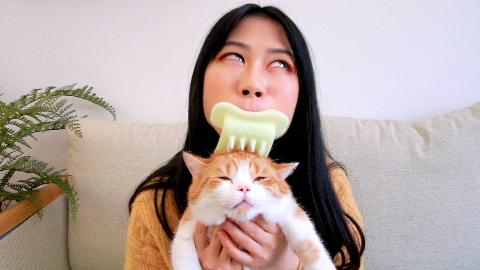 这个猫舌梳有倒刺,专用来舔猫猫,而我有一个大胆的想法……