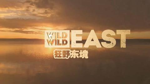 【纪录片】狂野东境 迁徙【双语特效字幕】【纪录片之家爱自然】