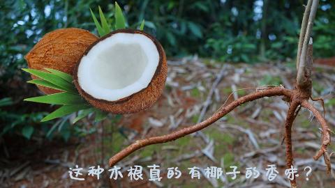 不加椰子,加这种木根就可以把鸡汤熬出椰子的香味,农村人真会吃