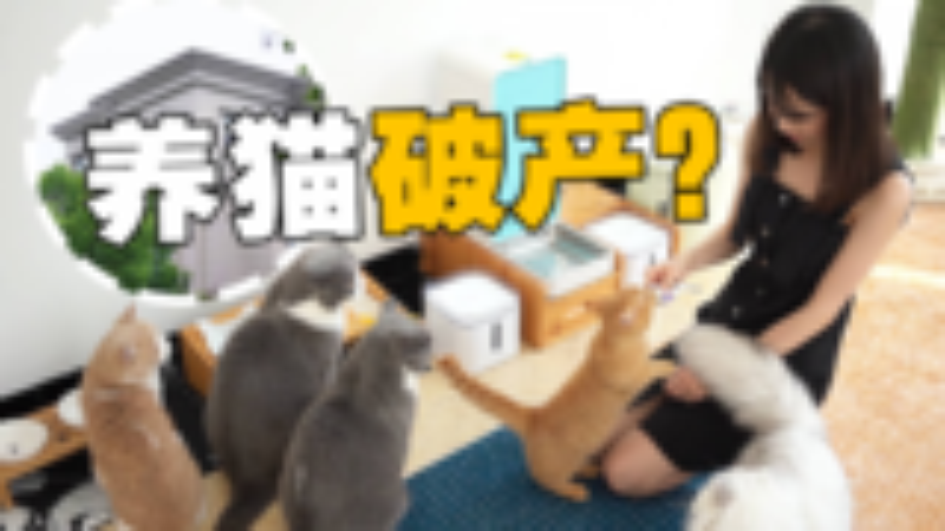 女子养五只猫导致破产,搬离豪宅?幕后故事大揭秘