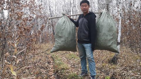 大兴安岭山林遍地松塔壳,吉祥捡了6袋挑下山,捡它回家干啥用?