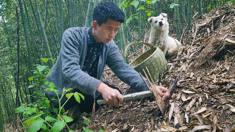 【野居青年】采来林中鲜笋配上去年的腊肉,在核桃树下等待夏天