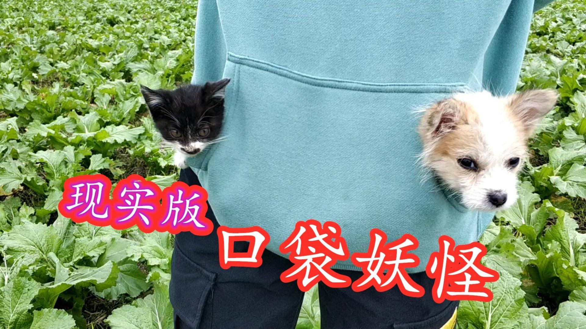 流浪猫狗:两只粘人的小家伙钻进口袋里当左右护法,顺便取一下暖