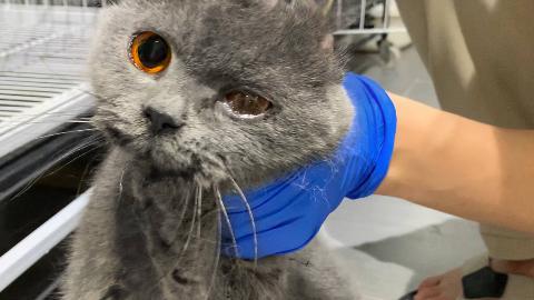 小蓝猫在血迹斑斑的楼道里主动救助:救救我吧!