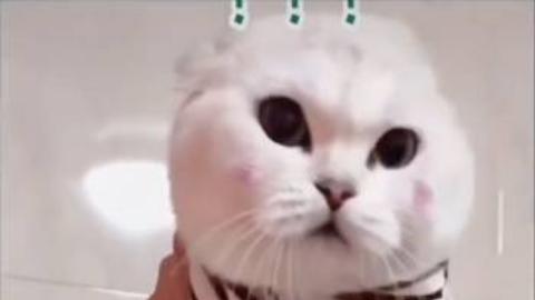 宠物猫  是猫可爱还是人有才!!