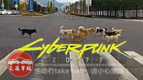 【CyberPunk2077】泛滥的流浪狗