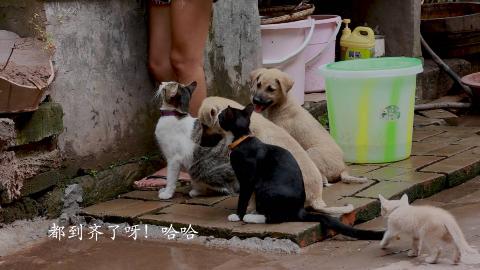 良梅家的猫猫狗狗也是好吃佬,良梅一切肉,3猫2狗闻着味就过来了