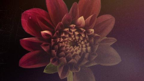 纪录片.BBC.汉普顿宫花展.E02.2019[高清][英字]
