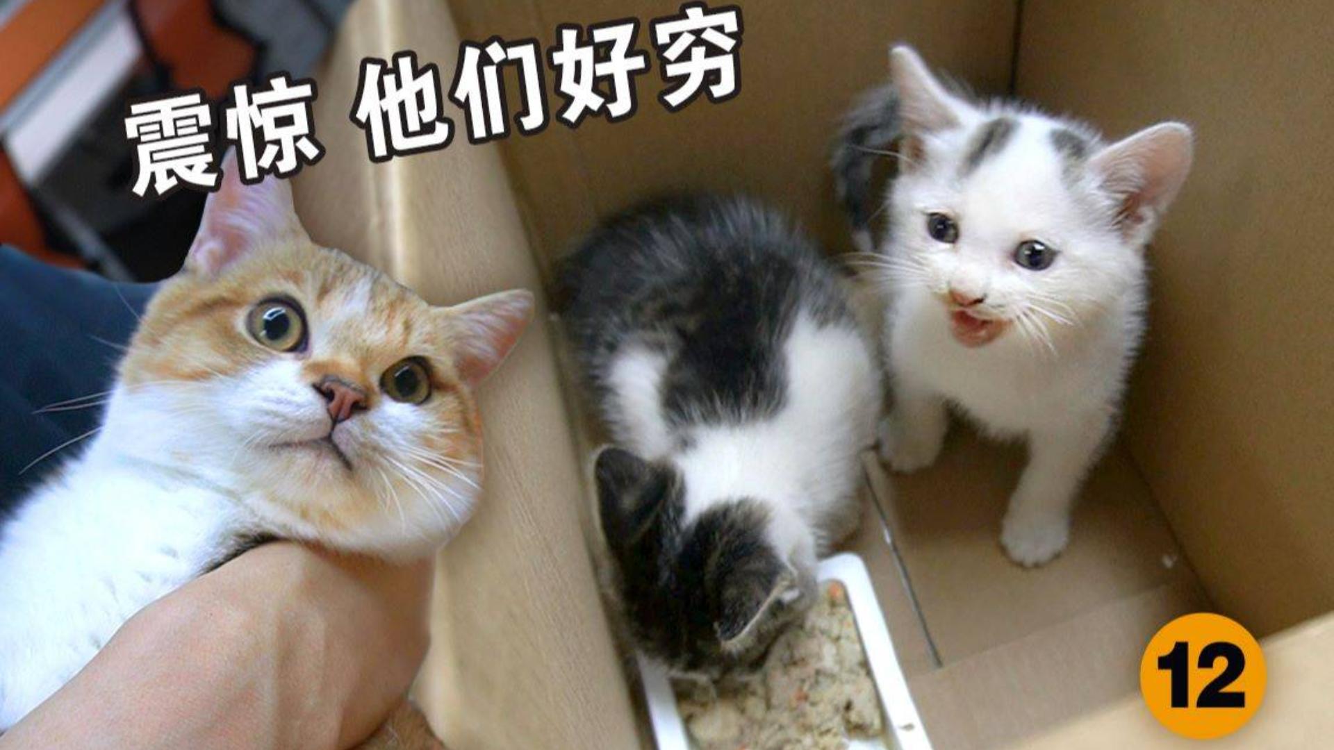 为了小野猫能安全过冬,有人不惜成为偷猫大盗!小野猫吃粮居然吃出了神奇奶音