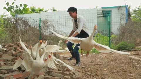【野居青年】驱车作画田野上,铁锅炖鹅肉飘香
