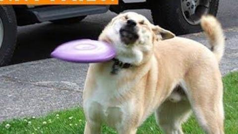 2018年尝试不要嘲笑有趣的PET失败|Funny Pet视频