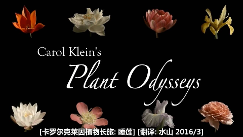 BBC 植物长旅:睡莲(2015)水山汉化