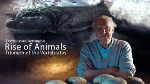 [BBC/2013]大卫爱登堡-动物的崛起:脊椎动物的胜利 1080p中文字幕