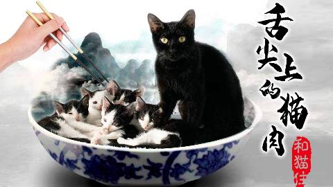 救助的猫咪竟被浇上橄榄油,一家六口全沦为盘中餐?!