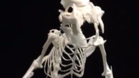 95后炫酷新职业:用动物骨骼造恐龙标本