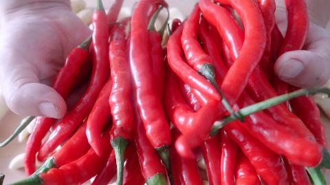 1斤辣椒,2斤大蒜,教你做正宗的蒜蓉辣椒酱,拌啥都好吃!
