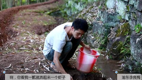 农村小伙给西瓜淋水,竟然在小溪沟舀到虾,媳妇说弄回去做虾酱