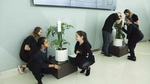30天植物实验