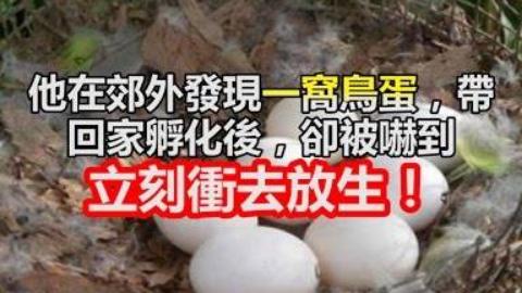 他在郊外發現一窩鳥蛋,帶回家孵化後,卻被嚇到立刻衝去放生!
