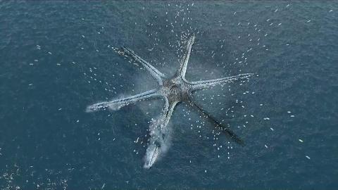 【好看】海底突现神秘生物,身上携带万枚鸟蛋,一旦出生就会喷出炽热岩浆